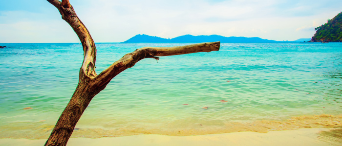 Piece of wood on a beach